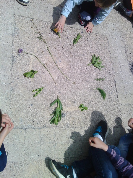 camifolia-1
