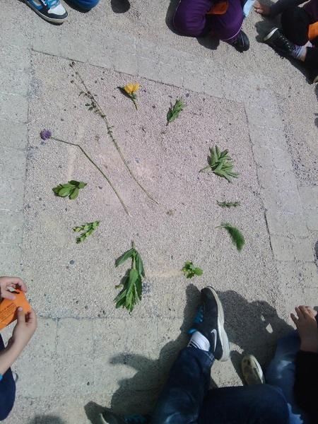 camifolia-2